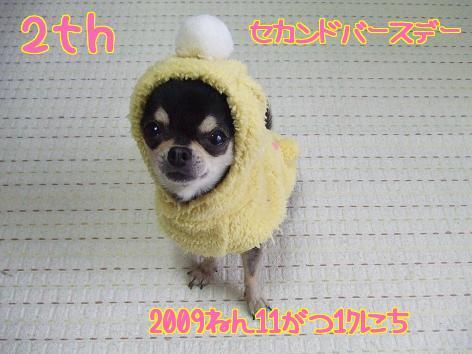 1_20091117122316.jpg