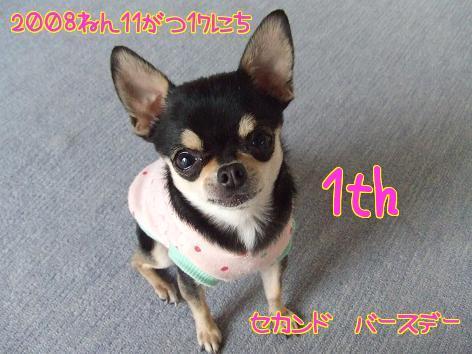2_20091113092339.jpg