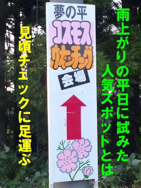 010 となみ夢の平 コスモスウォッチング (2)