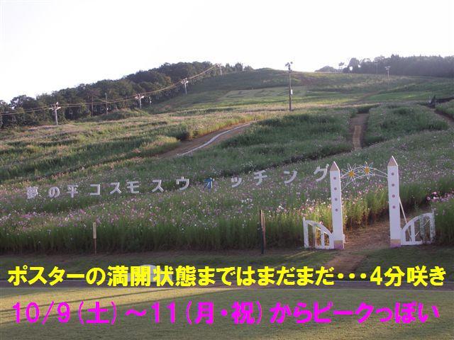 010 となみ夢の平 コスモスウォッチング (6)