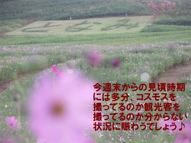 010 となみ夢の平 コスモスウォッチング (9)
