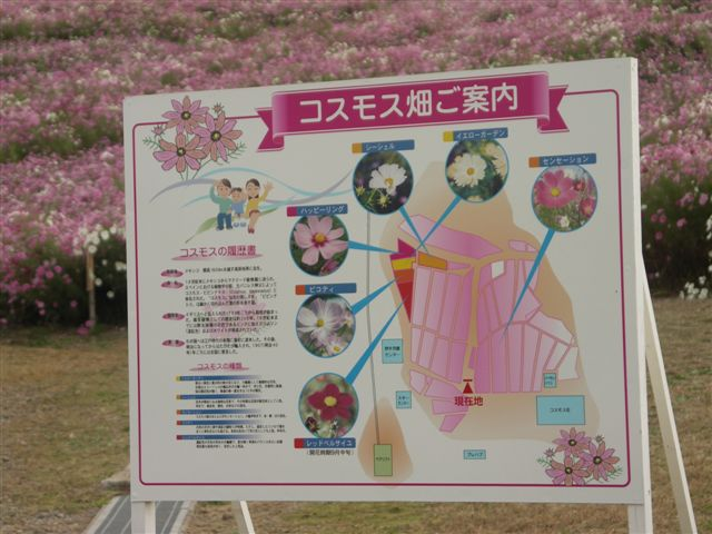 2010 となみ夢の平コスモスウォッチング (2)