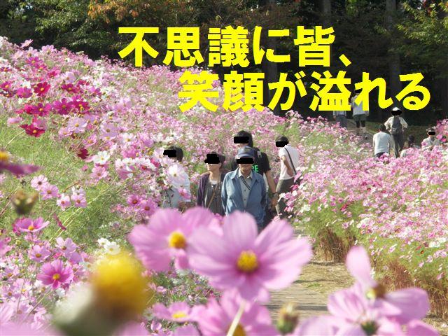 2010 となみ夢の平コスモスウォッチング (6)