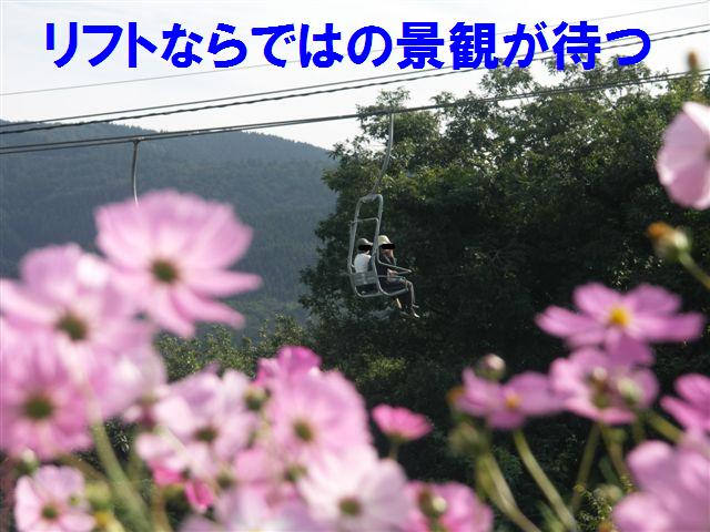 2010 となみ夢の平コスモスウォッチング (8)