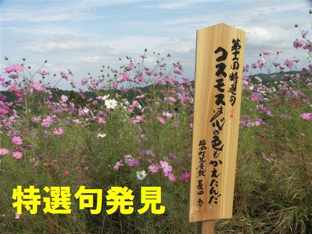 2010 となみ夢の平コスモスウォッチング (10)
