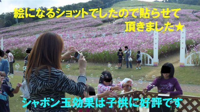 2010 となみ夢の平コスモスウォッチング (17)