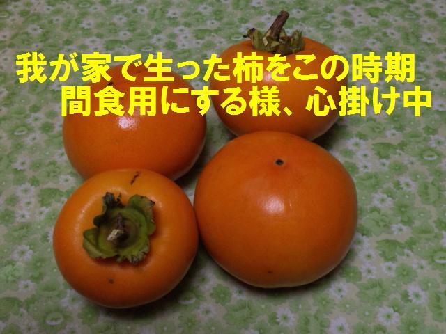 今年の自家製の柿