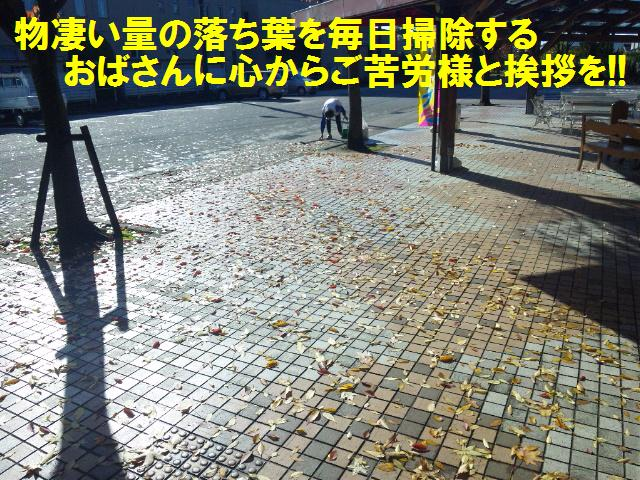 落ち葉 (2)
