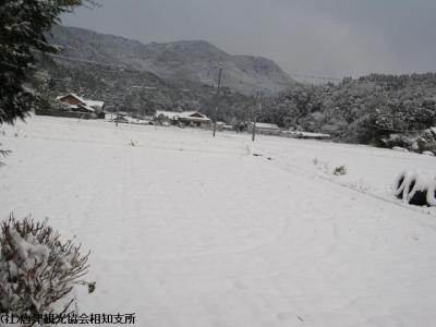 雪(2010年1月13日)01