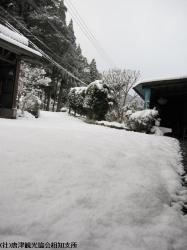 雪(2010年1月13日)02