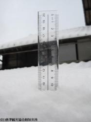 雪(2010年1月13日)04