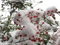雪(2010年1月13日)05