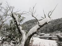 雪(2010年1月13日)06