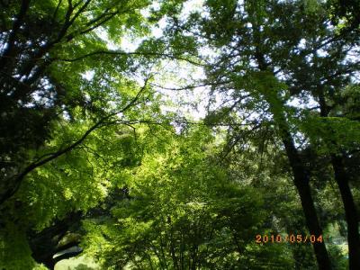 4_20100504175435.jpg