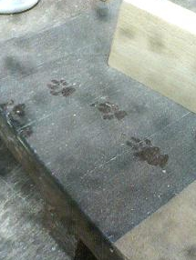 たぬきの足跡