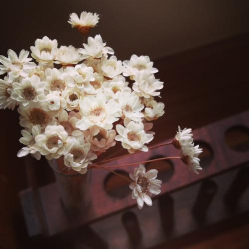 ふしぎなお花