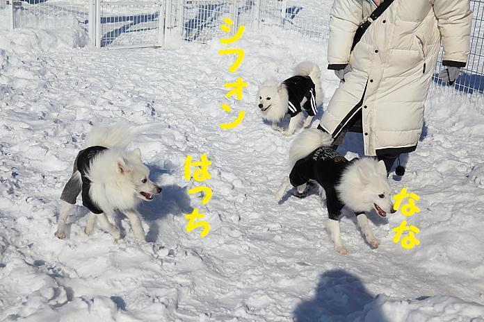 IMG_33812010.jpg