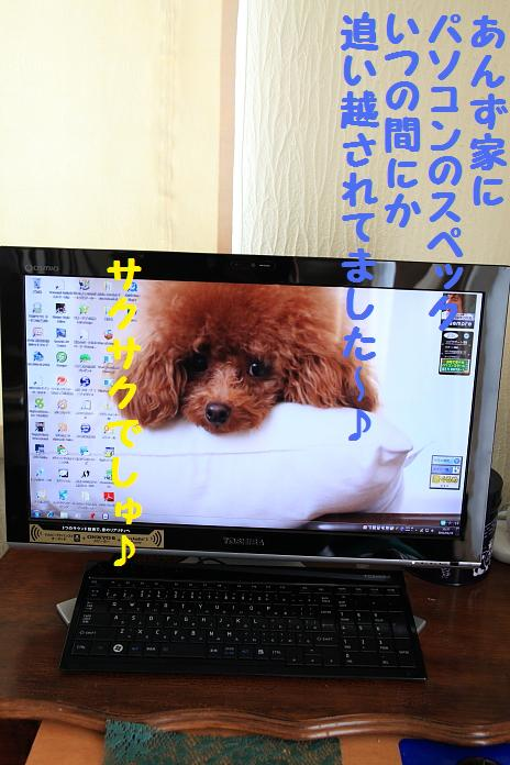 IMG_38522010.jpg