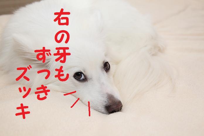 IMG_58642010.jpg