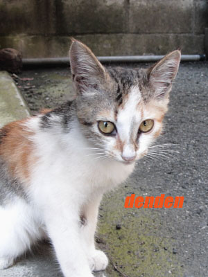 IMG_0664-4000猫