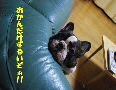 DSC_0003_20091130144159.jpg
