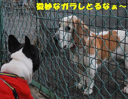 DSC_0041_20110222224001.jpg