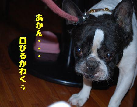 DSC_0042_20091107203000.jpg
