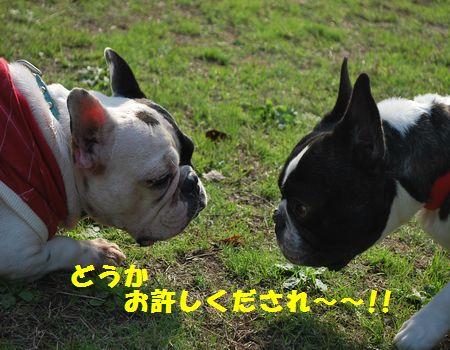 DSC_0164_20091125151242.jpg