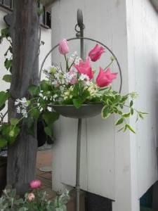 庭の花26
