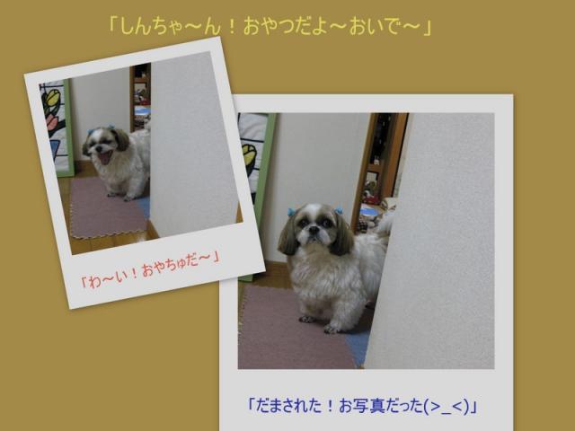 2010_03_063_convert_20100312170938.jpg