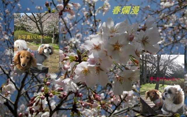 2010_03_26_convert_20100328161428.jpg
