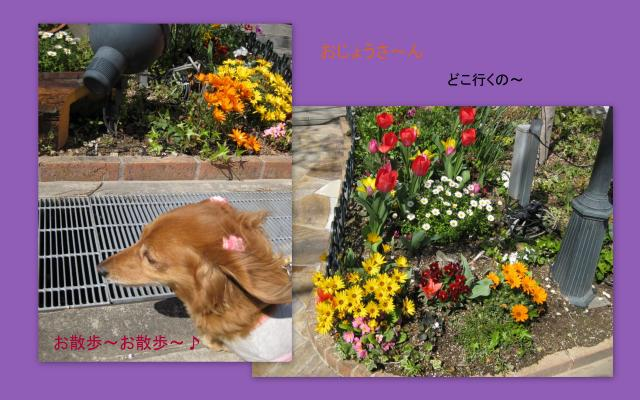 2010_03_27_convert_20100328161533.jpg