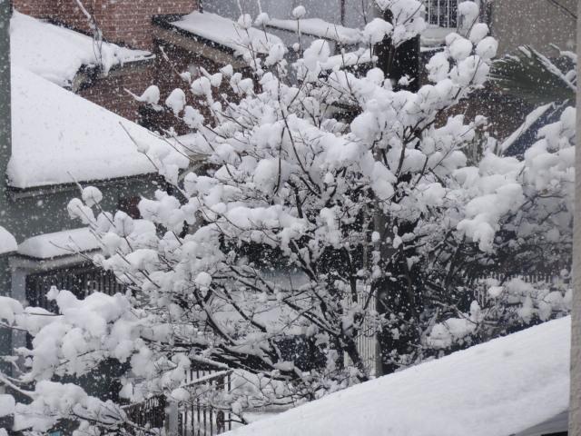 2012229積雪10センチC