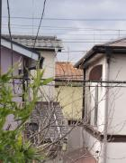 2012331竹3