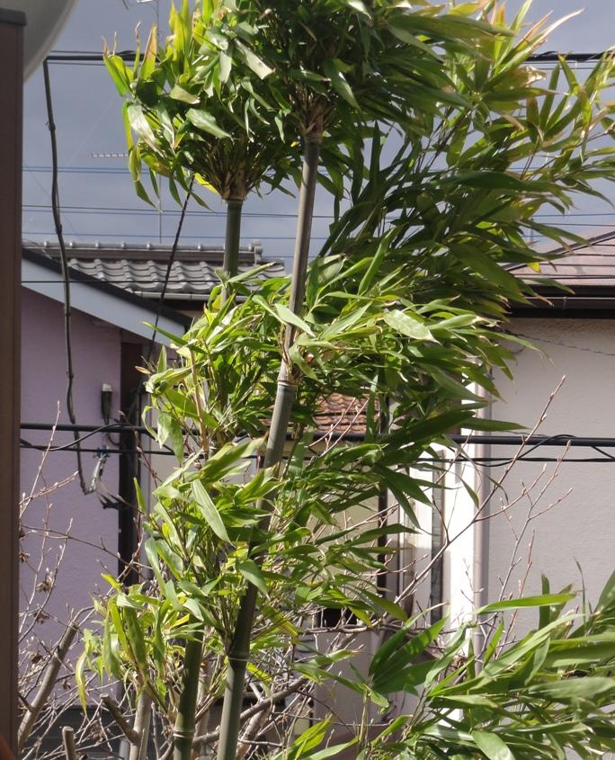2012331竹4