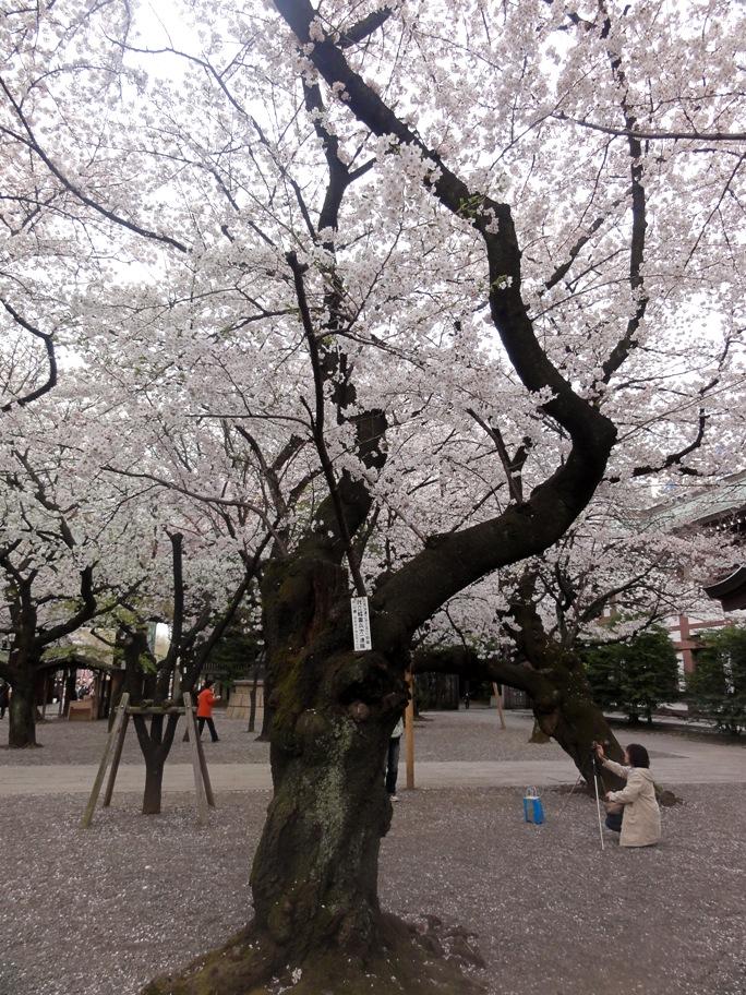 靖国 海軍  桜