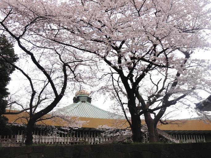 武道館&桜