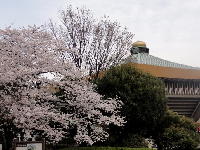 武道館&桜B