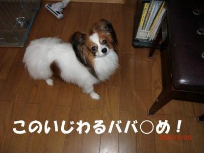 005_convert_20100529232731.jpg