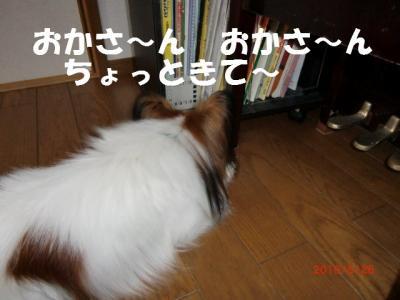008_convert_20100529214107.jpg