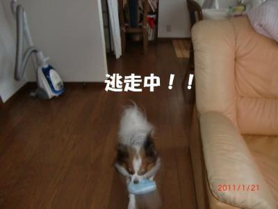 009_convert_20110127101947.jpg