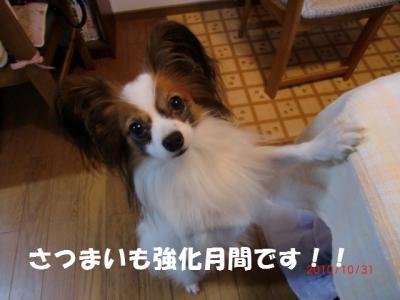 011_convert_20101106233322.jpg
