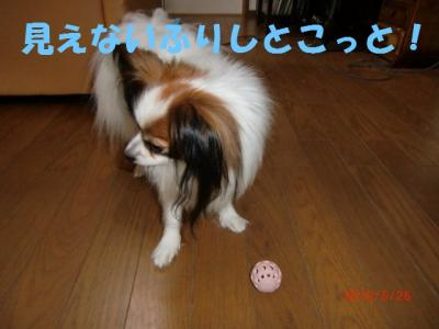 013_convert_20100529221314.jpg