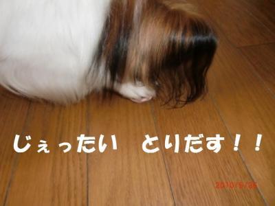 017_convert_20100529222141.jpg