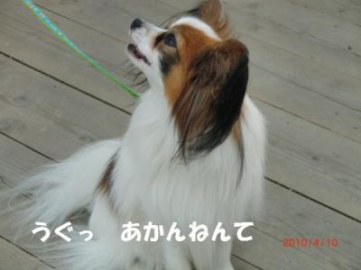 058_convert_20100411225035.jpg