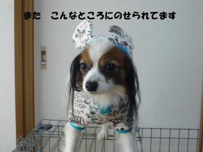 059_convert_20100311214159.jpg