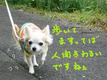 P1000150_convert_20110308212834.jpg