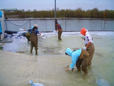 庄川鮭まつり 鮭のつかみ取り体験