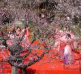 飛び梅の舞い2ブログ用