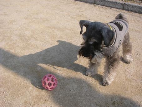 ボールを狙う三四郎